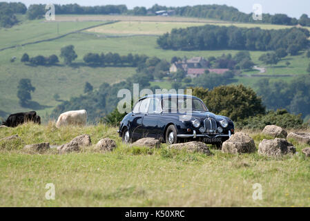 Minchinhampton Common in the southern Cotswolds Gloucestershire England UK. August 2017. A vintage Jaguar car crossing - Stock Photo