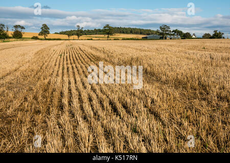 Landscape of harvested grain crop field with distant farm buildings, trees and blue sky in rural agricultural landscape, - Stock Photo
