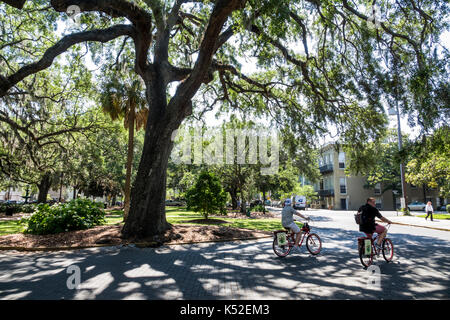 Savannah Georgia historic district Lafayette Square cyclist bicycle tree oak - Stock Photo
