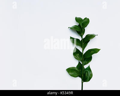 Minimalist plant background Bright green leaves are lying on a white background Flat lay Modern minimalistic mockup - Stock Photo