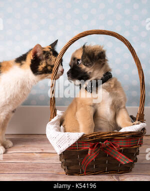Cute tan and black puppy in a basket - Stock Photo