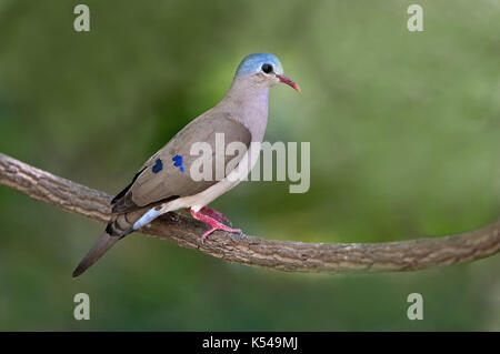 Birds of the Gambia - Stock Photo