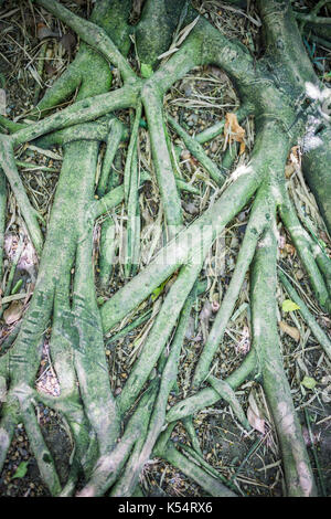 roots texture in the fertile garden Stock Photo: 143924406 - Alamy