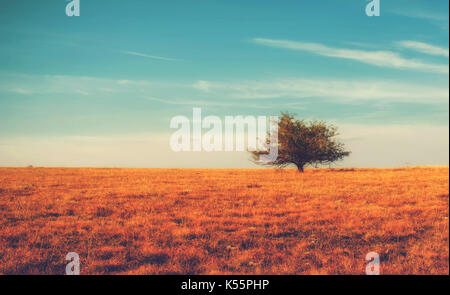 Lonely tree on yellow meadow an mountain landscape with clouds. Autumn bright background. - Stock Photo