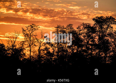 Sunrise tree silhouettes with orange dramatic sky - Stock Photo