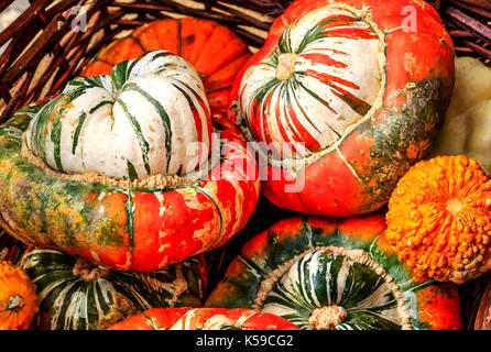 Big and beautiful 'Turks Turban' or French Turban Squashes - Stock Photo