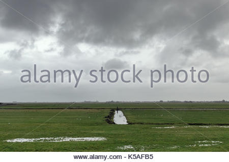 A wet meadow in a polder in Holland near Alkmaar, on a cloudy day. - Stock Photo