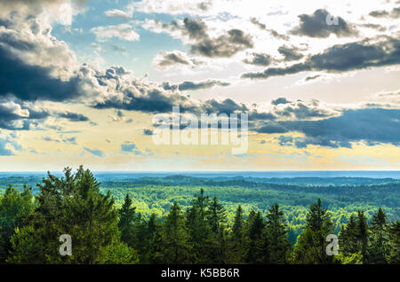 A pine forest with hints of the setting sun viewed from Suur Munamägi in Estonia - Stock Photo