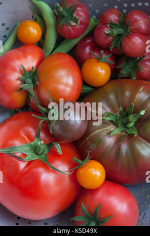 A variety of tomatoes harvested from the garden Stock Photo