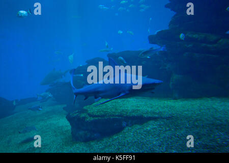 Colorful exotic tropical fishes and sharks underwater in aquarium - Stock Photo