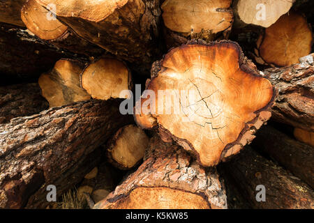 Tree trunks stacked - Stock Photo