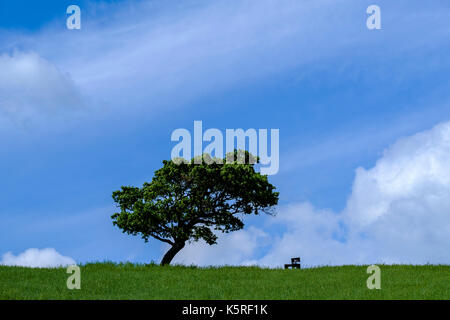 Typical tuscanian landscape with a pine tree on a green hill in Val di Cecina - Stock Photo