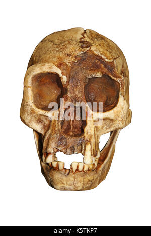 'The Hobbit' Homo floresiensis