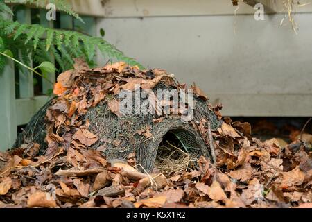 Hedgehog house in a suburban garden along with straw bedding and leaf litter, Chippenham, Wiltshire, UK, August. - Stock Photo