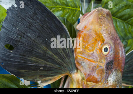 Big Triglidae. red snapper - Stock Photo