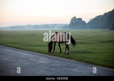 Horse in the New Forest District - Stock Photo