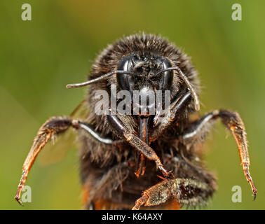 Close-up of a bee - Stock Photo