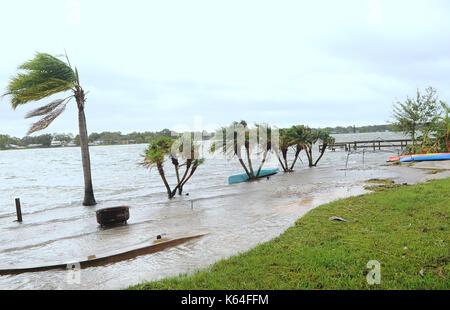 Orlando, United States. 11th Sep, 2017. September 11, 2017- Orlando, Florida, United States - Palm trees are seen - Stock Photo