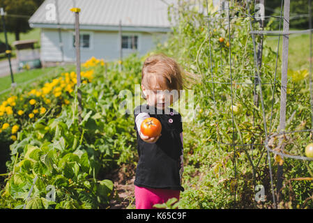 A young girl holds a tomato in her hand after picking it from the gardne. - Stock Photo