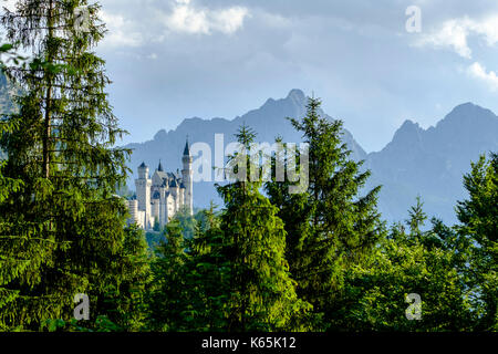 Neuschwanstein Castle, seen through trees in front of high mountains - Stock Photo