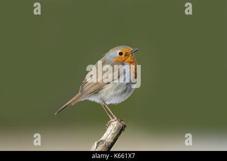 bird feeder, birdfeeder, feeder, winter, peanuts, nuts, food, feeding, eat, eating - Stock Photo