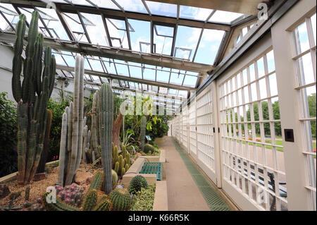 Cactus and succulents displayed in the Victorian Glass Pavilions, a majestic glasshouse at Sheffield Botanical Gardens, - Stock Photo