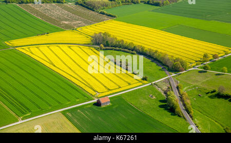 Canola fields on the town borders between Rüthen, Warstein-Belecke and Anröchte, agriculture, old barn, fields, - Stock Photo