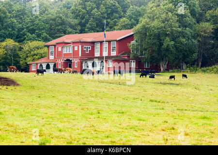 Old large typically swedish red wooden house, now serving as a Nääs Banquet Hall, with cows grazing in pasture outside - Stock Photo