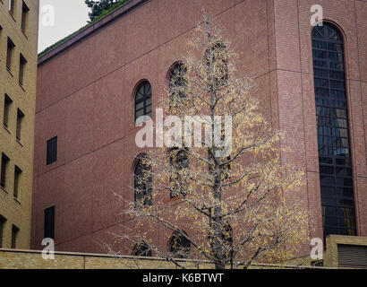 Office buildings with autumn tree at downtown in Sendai, Japan. - Stock Photo