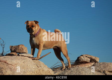 Dog standing on a rock - Stock Photo
