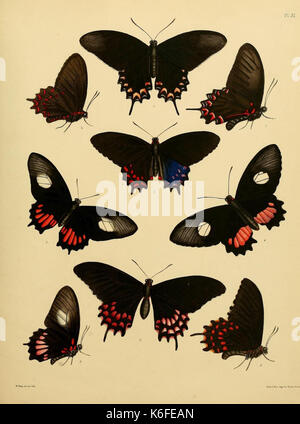 Catalogue of lepidopterous insects in the collection of the British Museum (8539665872) - Stock Photo