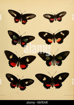 Catalogue of lepidopterous insects in the collection of the British Museum (8539665412) - Stock Photo
