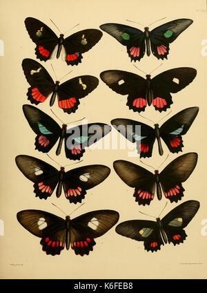Catalogue of lepidopterous insects in the collection of the British Museum (8538556665) - Stock Photo