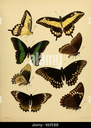 Catalogue of lepidopterous insects in the collection of the British Museum (8539663660) - Stock Photo