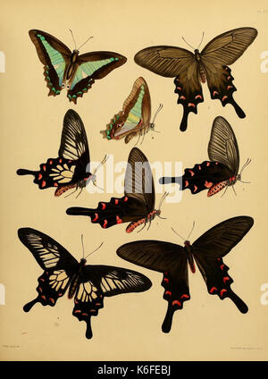 Catalogue of lepidopterous insects in the collection of the British Museum (8539663078) - Stock Photo