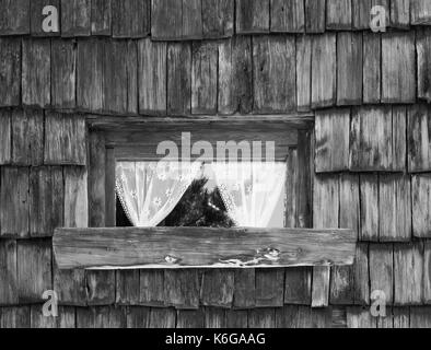 old wooden window with lace curtains windows an wall texture background image in black