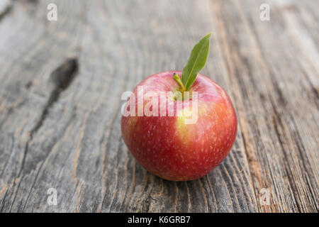 Season of apple picking and all kind of assessors are placed just for the occasion. - Stock Photo