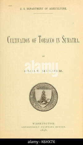 Cultivation of Tobacco in Sumatra BHL42385820 - Stock Photo
