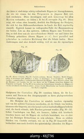 Die geologischen grundlagen der abstammungslehre (Page 107) BHL40500662 - Stock Photo