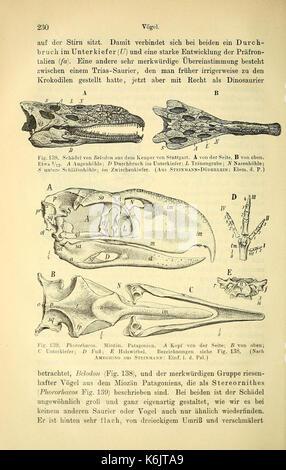 Die geologischen grundlagen der abstammungslehre (Page 230) BHL40500785 - Stock Photo