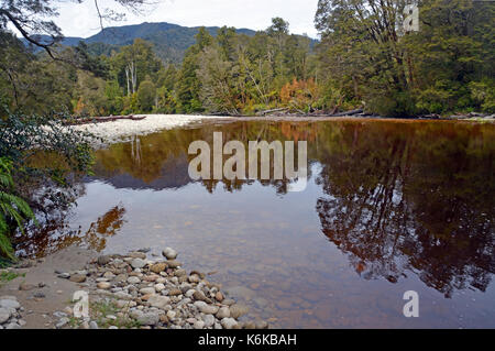 Reflections in the water of the Oparara River near Karamea, West Coast  New Zealand. Note the amazing golden brown - Stock Photo