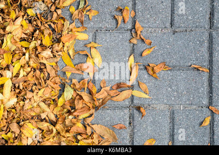 Yellow Fallen Autumn Leaves on the on the Sidewalk Paved with Gray Concrete Paving Stones Top View. Autumn Approach, - Stock Photo