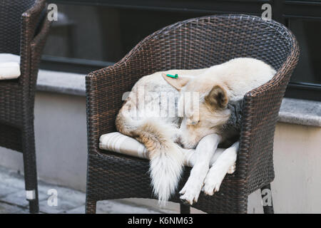 Dog sleeping on cafe chair - Stock Photo