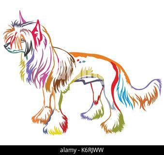 Colorful decorative portrait of standing in profile Chinese Crested Dog, vector isolated illustration on white background - Stock Photo