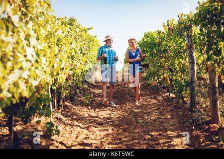 Beautiful smiling couple walking through a vineyard and tasting wine. - Stock Photo