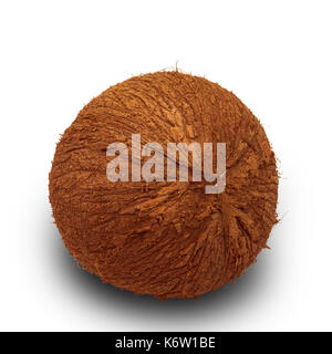 coconuts isolated on the white background - Stock Photo