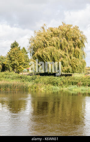 Across The River Trent Swalkstone. Looking across the river to a Willow Tree and on to a garden structure in the - Stock Photo