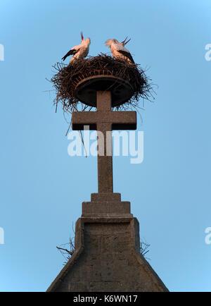 Pairof white storks (Ciconia ciconia), rattles in the nest on Catholic parish church St. Johannes Baptist, Bad Saulgau - Stock Photo