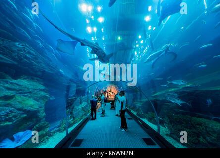 Underwater tunnels in the Dubai Aquarium and Underwater Zoo, Dubai Mall, Dubai, United Arab Emirates - Stock Photo