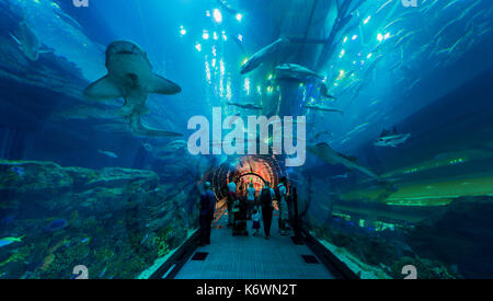 Underwater tunnels in the Dubai Aquarium and Underwater Zoo, Dubai Mall, Dubai, United Arab Emirates - Stock Photo